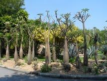 Δημόσιο πάρκο αριθ. 9 στη Μπανγκόκ Ταϊλάνδη στοκ εικόνες