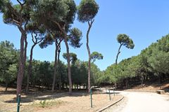 Δημόσιο πάρκο Horsh Βηρυττός της Βηρυττού Στοκ εικόνες με δικαίωμα ελεύθερης χρήσης