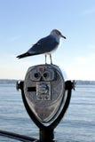 Δημόσιο seagull διοπτρών Στοκ φωτογραφία με δικαίωμα ελεύθερης χρήσης