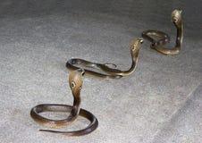 Δηλητηριώδη φίδια Στοκ φωτογραφία με δικαίωμα ελεύθερης χρήσης