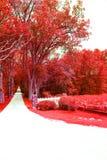 Διάβαση δέντρων στοκ εικόνες