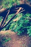 Διάβαση κάτω από το πεσμένο δέντρο στοκ εικόνα με δικαίωμα ελεύθερης χρήσης