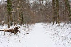 Διάβαση κάτω από το χιόνι στο δάσος Στοκ φωτογραφία με δικαίωμα ελεύθερης χρήσης