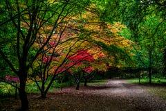 Διάβαση κήπων φθινοπώρου, Queenswood, Herefordshire Στοκ Εικόνες