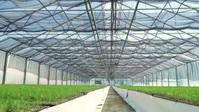 Διάβαση κατά μήκος των φυτευμένων νέων εγκαταστάσεων στο θερμοκήπιο Καλλιέργεια εγκαταστάσεων μέσα απόθεμα βίντεο
