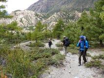 Διάβαση μέσω του δάσους πεύκων στοκ εικόνες
