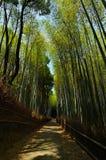 Διάβαση μέσω του άλσους μπαμπού, Arashiyama Κιότο Ιαπωνία Στοκ εικόνες με δικαίωμα ελεύθερης χρήσης