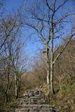 Διάβαση μέσω του δάσους Στοκ Εικόνες