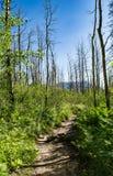 Διάβαση μέσω των πληγε'ντων από την ξηρασία δέντρων Στοκ εικόνες με δικαίωμα ελεύθερης χρήσης