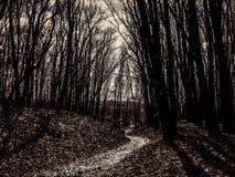 Διάβαση μέσω των τρομακτικών ξύλων Στοκ εικόνα με δικαίωμα ελεύθερης χρήσης