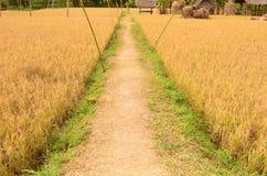Διάβαση μεταξύ του πεδίου ρυζιού στοκ εικόνες με δικαίωμα ελεύθερης χρήσης