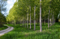 Διάβαση με τα δέντρα λευκών Στοκ εικόνες με δικαίωμα ελεύθερης χρήσης