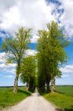 Διάβαση με τα δέντρα Στοκ εικόνες με δικαίωμα ελεύθερης χρήσης