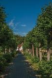 Διάβαση με τα δέντρα στον κήπο των μεσαιωνικών καταστροφών εκκλησιών, προς το τέλος του φωτός απογεύματος σε Damme Στοκ Φωτογραφία