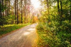 Διάβαση οδικών τρόπων πορειών την ηλιόλουστη ημέρα στο θερινό ηλιόλουστο δάσος στον ήλιο στοκ φωτογραφία