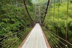 Διάβαση πεζών γεφυρών αναστολής στη ζούγκλα Στοκ Εικόνες