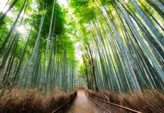 Διάβαση πεζών δασικό σε σκιερό μπαμπού με το φως του ήλιου σε Arashiyama Στοκ Εικόνες
