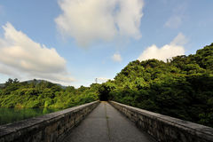 διάβαση πεζών ζουγκλών στοκ φωτογραφίες με δικαίωμα ελεύθερης χρήσης