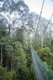 Διάβαση πεζών ζουγκλών μέσω Cloudforest Στοκ Εικόνες