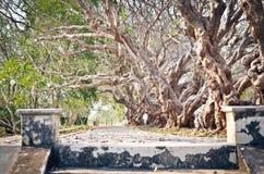 Διάβαση πεζών κάτω από το δέντρο plumeria Τονισμένη εκλεκτής ποιότητας επίδραση Στοκ φωτογραφία με δικαίωμα ελεύθερης χρήσης