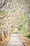Διάβαση πεζών κάτω από το δέντρο plumeria Τονισμένη εκλεκτής ποιότητας επίδραση Στοκ Εικόνα