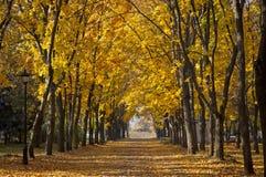 Διάβαση πεζών κήπων με τα γραφικά δέντρα φθινοπώρου Στοκ Φωτογραφία