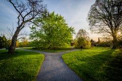 Διάβαση πεζών και δέντρα στο ηλιοβασίλεμα, στο δενδρολογικό κήπο Cylburn, στη Βαλτιμόρη, στοκ φωτογραφία