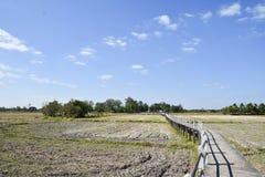 Διάβαση πεζών πλησίον στο ρύζι Στοκ εικόνες με δικαίωμα ελεύθερης χρήσης