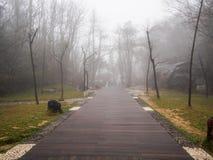 Διάβαση πεζών στην παχιά ομίχλη Στοκ φωτογραφίες με δικαίωμα ελεύθερης χρήσης