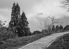 Διάβαση πεζών στο δάσος Στοκ Εικόνες
