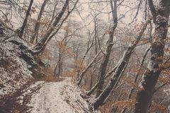 Διάβαση πεζών στο δάσος που καλύπτεται στο χιόνι Στοκ Εικόνα