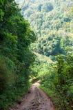 Διάβαση πεζών στο τροπικό δάσος στοκ εικόνες