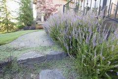 Διάβαση πεζών της Heather Plants Flowers Along Paver στοκ εικόνες με δικαίωμα ελεύθερης χρήσης