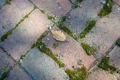 Διάβαση πεζών τούβλου με το βρύο και ένα φύλλο στοκ εικόνα