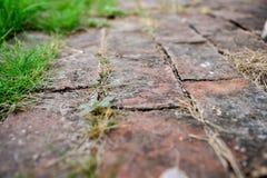Διάβαση πεζών τούβλινη Στοκ Εικόνα