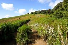 Διάβαση πεζών φύσης στην επαρχία γιων της Mae Hong στοκ φωτογραφίες