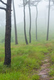 Διάβαση πεζών φύσης Στοκ Εικόνες