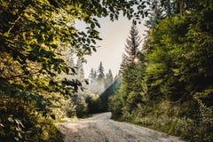 Διάβαση σε ένα δάσος Στοκ φωτογραφίες με δικαίωμα ελεύθερης χρήσης