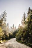 Διάβαση σε ένα δάσος Στοκ εικόνες με δικαίωμα ελεύθερης χρήσης