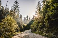 Διάβαση σε ένα δάσος Στοκ φωτογραφία με δικαίωμα ελεύθερης χρήσης