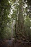 Διάβαση σε ένα δάσος στοκ εικόνα με δικαίωμα ελεύθερης χρήσης