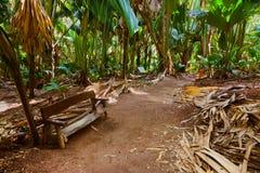 Διάβαση στη ζούγκλα - Vallee de Mai - Σεϋχέλλες στοκ εικόνα