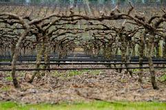 Διάβαση στη σήραγγα των δέντρων πεύκων, Αυστραλία Στοκ εικόνες με δικαίωμα ελεύθερης χρήσης