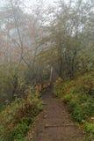 Διάβαση στη φύση Στοκ εικόνα με δικαίωμα ελεύθερης χρήσης