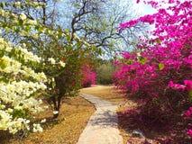 Διάβαση στον κήπο του Βούδα, Νέο Δελχί Στοκ εικόνες με δικαίωμα ελεύθερης χρήσης