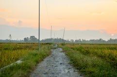 Διάβαση στους τομείς ρυζιού Στοκ Εικόνα