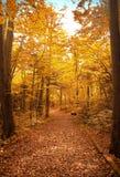 Διάβαση στο δάσος φθινοπώρου Στοκ εικόνες με δικαίωμα ελεύθερης χρήσης