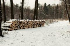 Διάβαση στο δάσος Στοκ Εικόνες