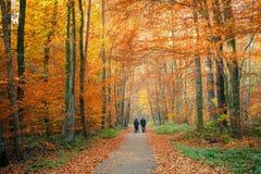 Διάβαση στο δάσος φθινοπώρου Στοκ Εικόνες