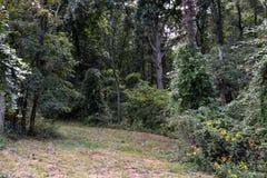 Διάβαση στο δάσος στοκ εικόνα